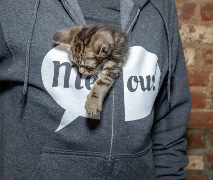 Photo courtesy of the Brooklyn Cat Café