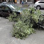 Montague Street devastation