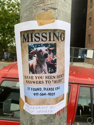 Lost Dog: Help Find Alba