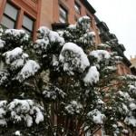 bkhts-snow12
