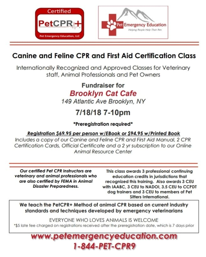 The Cat Cafe Presents Cpr For Cats And Dogs Brooklyn Heights Blog