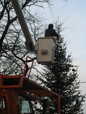 Removing decorations from tree at entrance to Promenade, January 13, 2009.