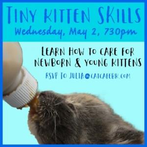 kitten skills