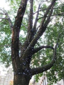 montabuestbid_treelights