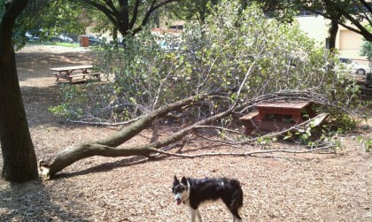 tree-down-in-hillside-park-1