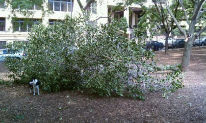 tree-down-in-hillside-park2-1